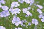 畑でのお花